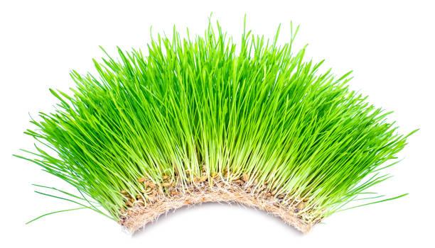 Green grass arch stock photo