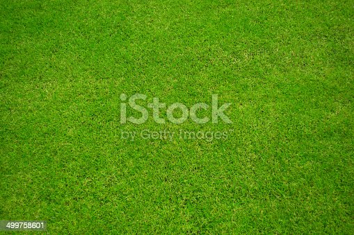 istock Green grass background and texture 499758601