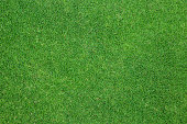 Green grass background. background texture.
