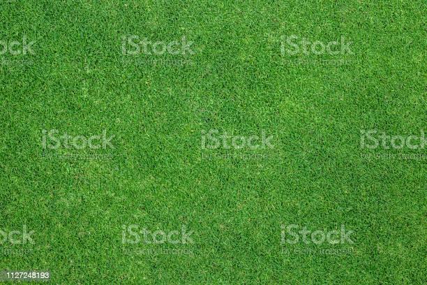 Green grass background background texture picture id1127248193?b=1&k=6&m=1127248193&s=612x612&h=uvupj0pk53vkeaolaet slplsydzz6d8wbjrfblbrvq=