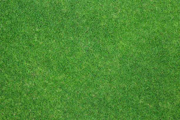fundo de grama verde. textura de fundo. - gramado terra cultivada - fotografias e filmes do acervo