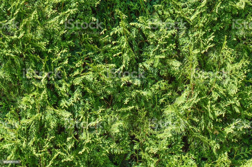 Green grass background. Fresh green grass moss floor garden texture background. Nature backdrop. Green grass seamless pattern. - Royalty-free Backgrounds Stock Photo