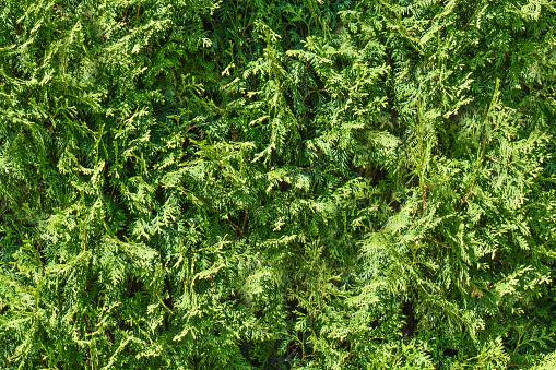 Green Grass Background Fresh Green Grass Moss Floor Garden Texture Background Nature Backdrop Green Grass Seamless Pattern Stock Photo - Download Image Now