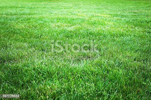 istock Green grass background from a field 597228534