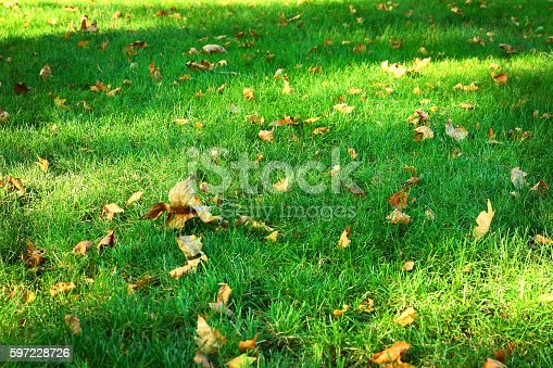 istock Green grass background from a field 597228726