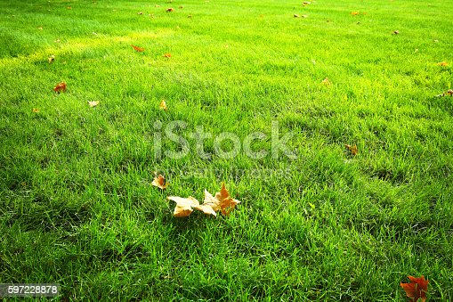 istock Green grass background from a field 597228878