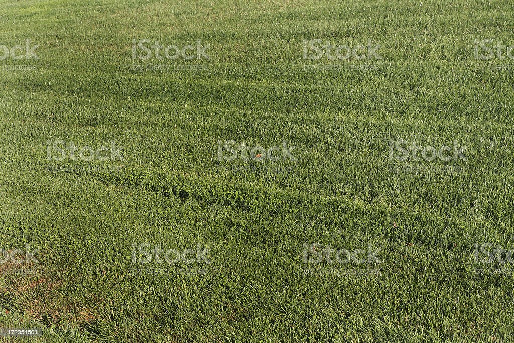 Green Grass Background Lawn royalty-free stock photo