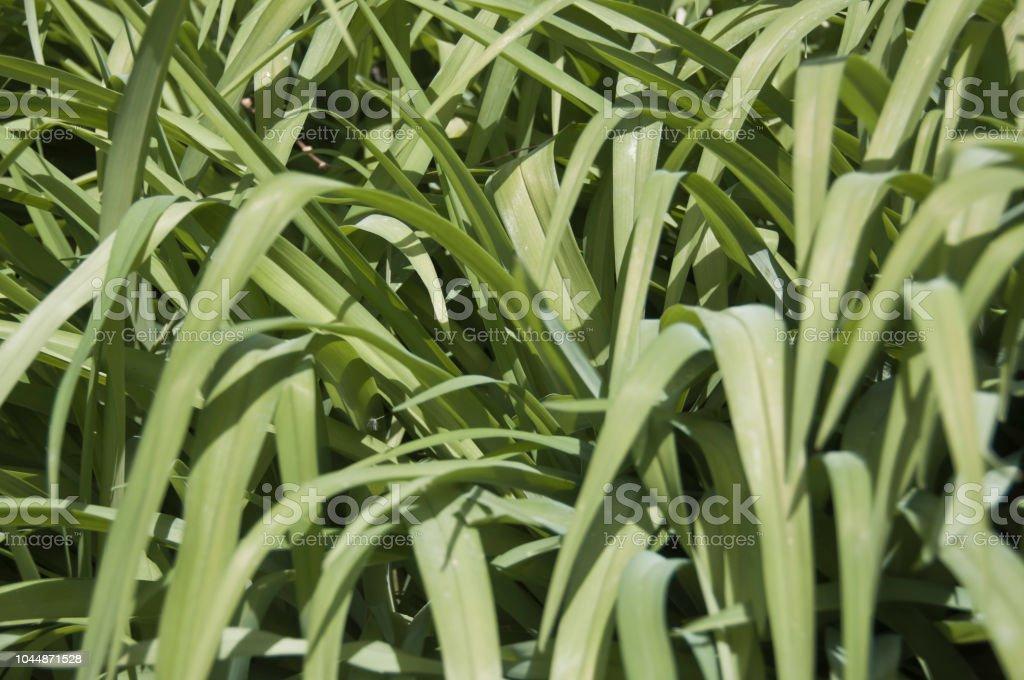 Grüne Gras Hintergrund – Foto