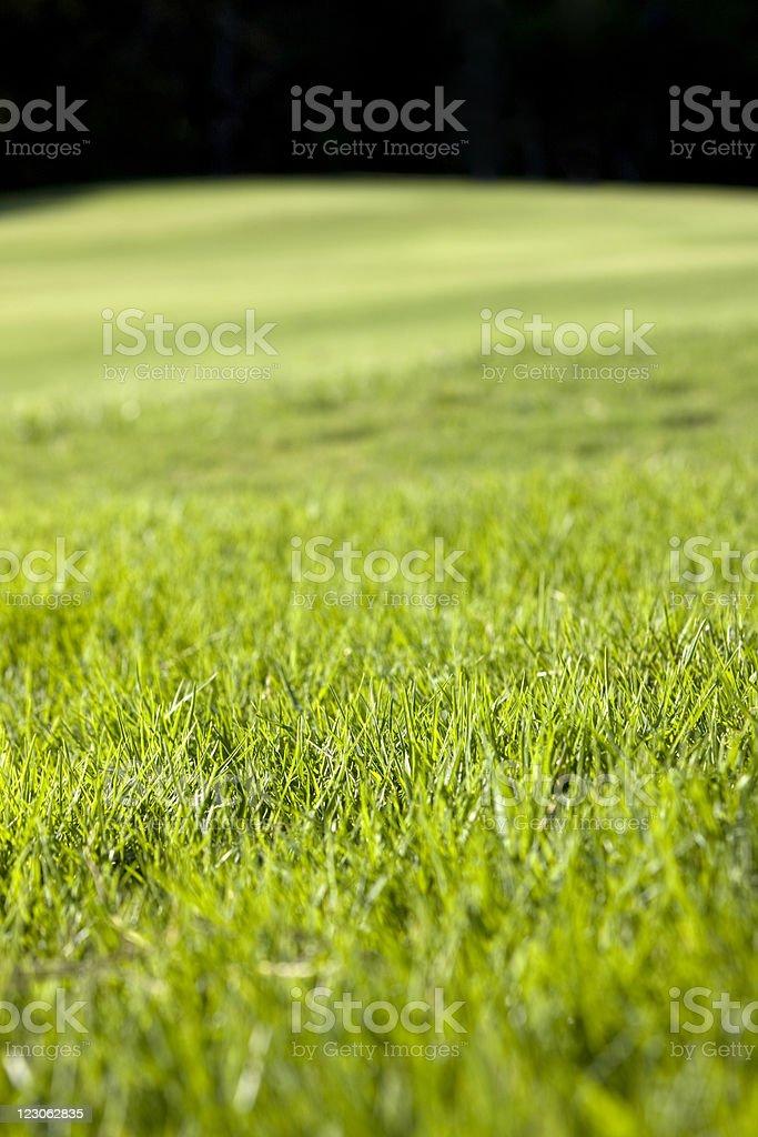 Sfondo Verde Erba Fotografie Stock E Altre Immagini Di Abbondanza