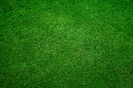 Fresh green grass in football pitch