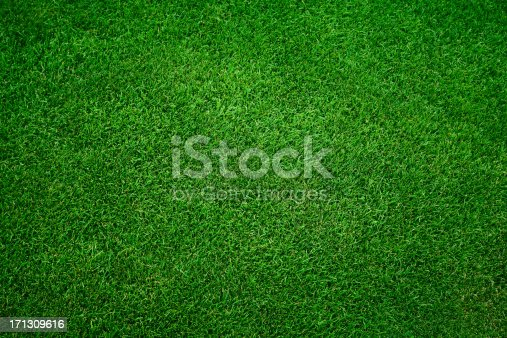 Fresh green grass in football pitch