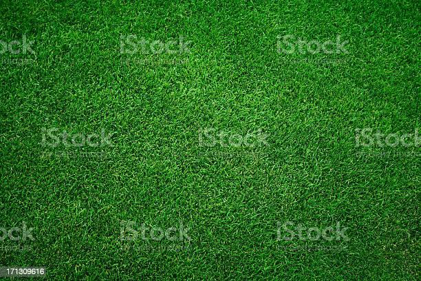 Green grass background picture id171309616?b=1&k=6&m=171309616&s=612x612&h=mbidpgvxs6gbixyyhf6nluyu1bff6 9zccmaxcaxgte=