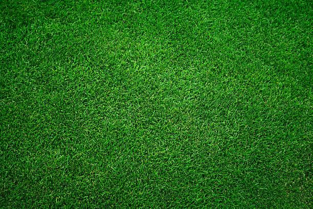 Green grass background picture id171309616?b=1&k=6&m=171309616&s=612x612&w=0&h=ikqel7lzedvxu276zmbnsz1ygoeijgl4nhc2fhzmpzy=