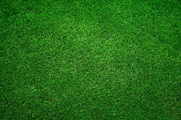 Green grass background Fresh green grass in football pitch turf stock pictures, royalty-free photos & images