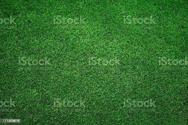 Photo of Green grass background