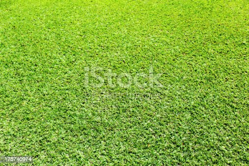 istock Green grass background 175740974