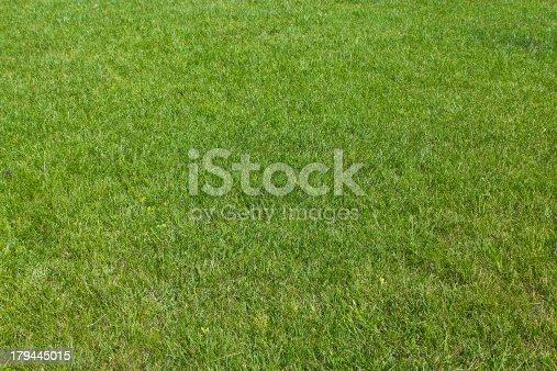 istock Green grass background 179445015