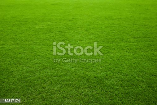 istock Green grass background 185317174