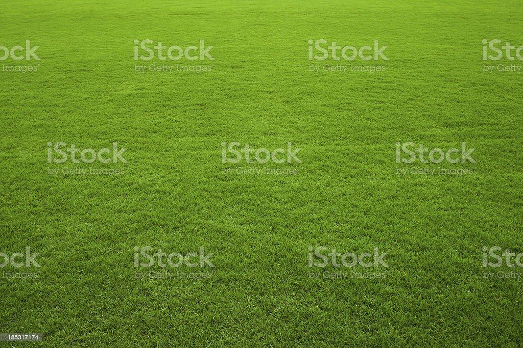Zielona Trawa tło – zdjęcie