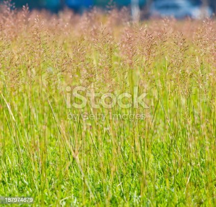 istock Green grass background 187974679