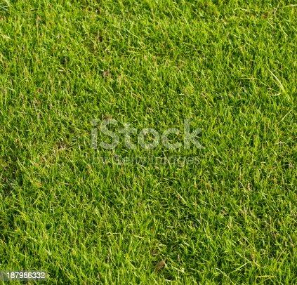 istock Green grass background 187986332