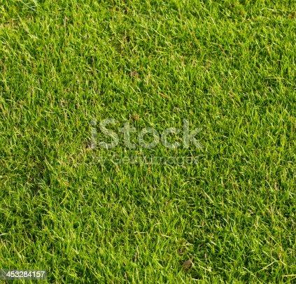 istock Green grass background 453284157