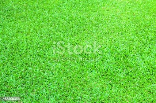 istock Green grass background 463509353