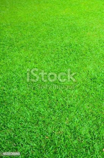 istock Green grass background 463509585