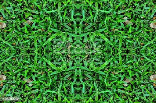 istock Green grass background 499253234