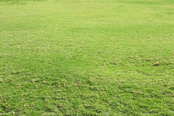 Fundo de grama verde - foto de acervo