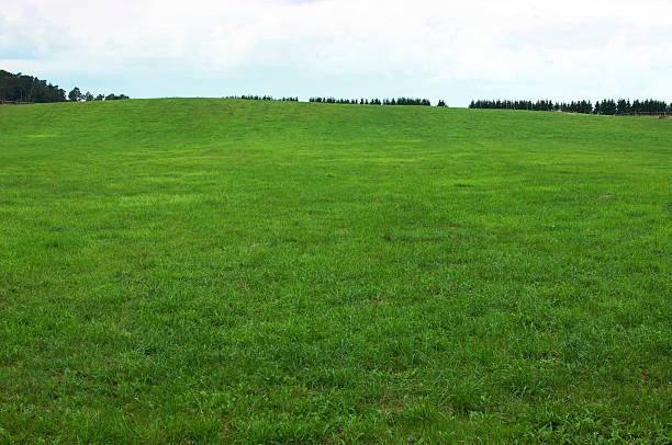 fundo de grama verde - gramado terra cultivada - fotografias e filmes do acervo