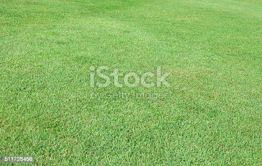 istock Green grass background 511728456