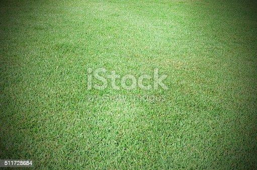 istock Green grass background 511728684