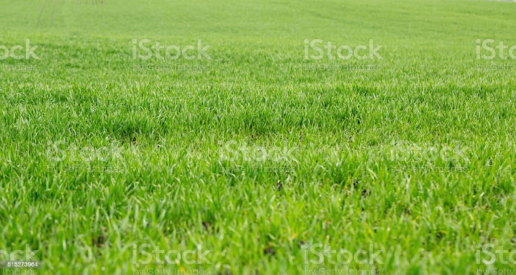 Sfondo Verde Erba Fotografie Stock E Altre Immagini Di