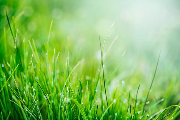Fondo verde hierba - foto de stock