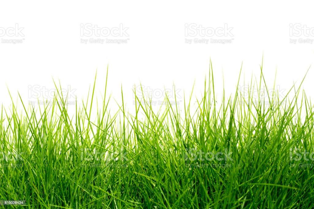 Fond vert herbe  photo libre de droits