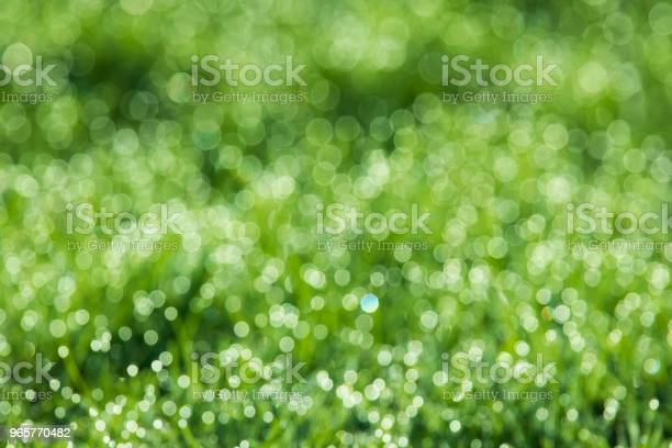 Green Grass Background Stock Photo - Download Image Now