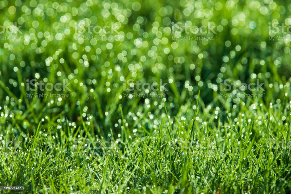 groen gras achtergrond - Royalty-free Abstract Stockfoto