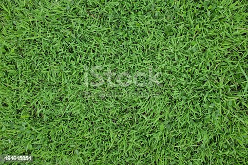 istock Green grass background texture. Element of design. 494645854