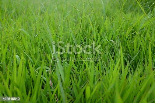 istock Green grass background texture. Element of design. 494646540