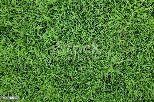istock Green grass background texture. Element of design. 500705376