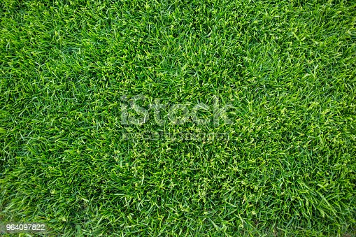 istock Green grass background texture. fresh bright juicy mowed lawn. top view, close up. 964097822