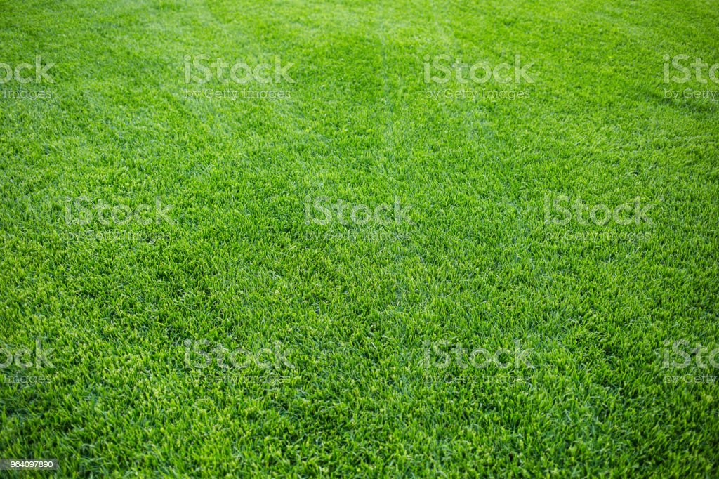 Green grass background texture. fresh bright juicy mowed lawn. top view. - Royalty-free Agricultural Field Stock Photo