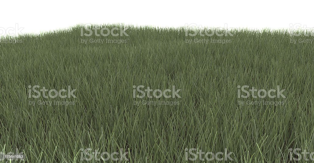 Green grass background texture royalty-free stock photo