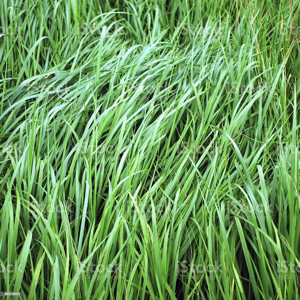 green grass blades royalty-free stock photo