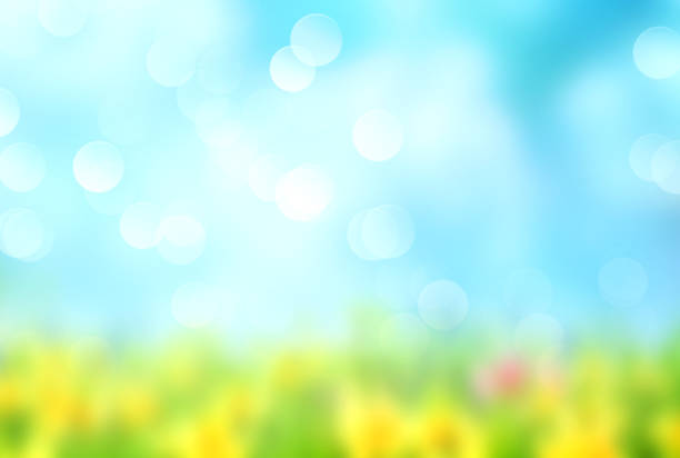 Green grass blue sky blurred background. Summer natural blurred background.Green grass blue sly backdrop. springtime stock pictures, royalty-free photos & images