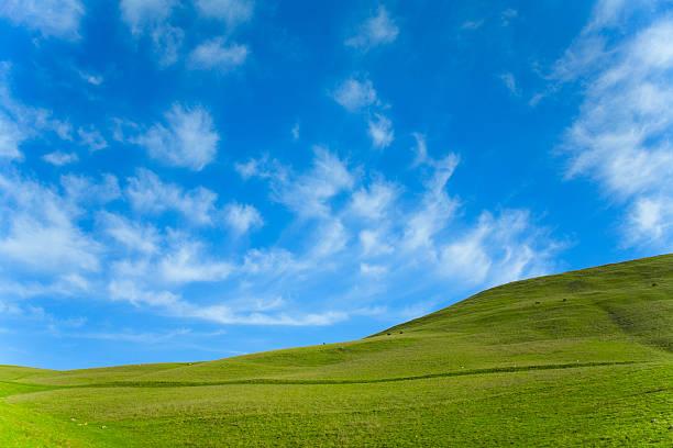 Grünen Wiese Blau Himmel – Foto