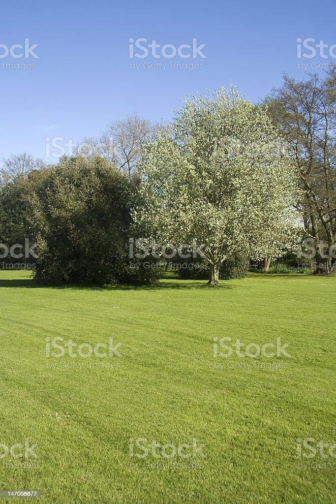 Green grass, blue sky royalty-free stock photo