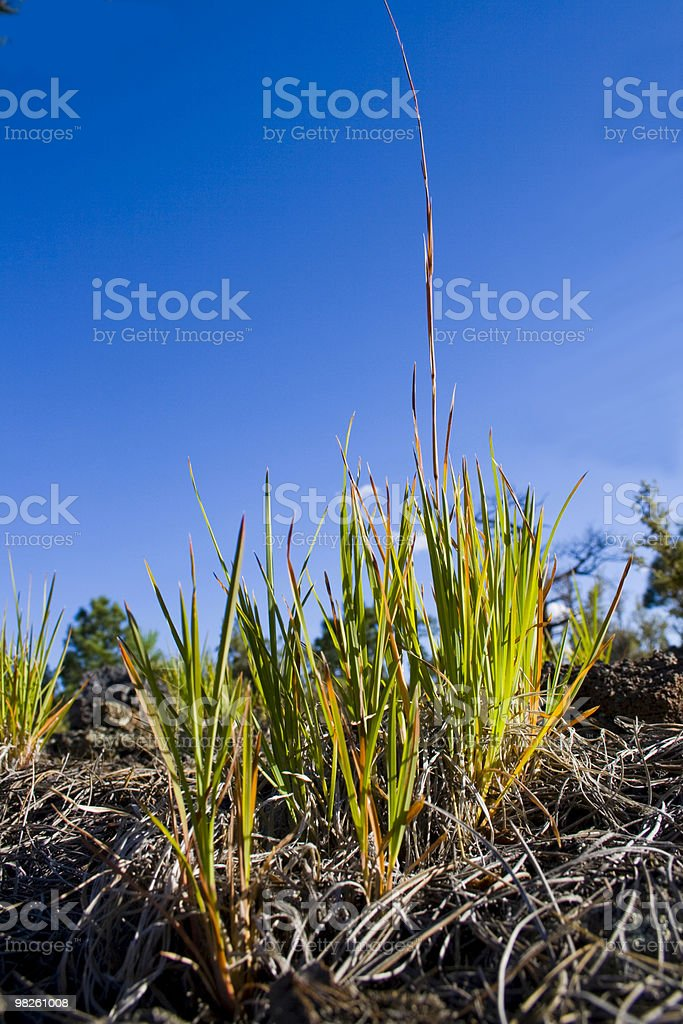 Green grass, blue sky royalty-free stock photo