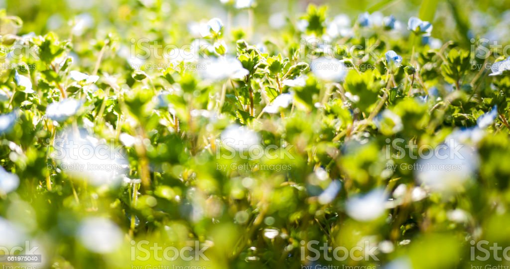 Green grass blurred background royalty-free stock photo